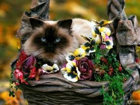 Обои Кошка в клумбе: , Кошки