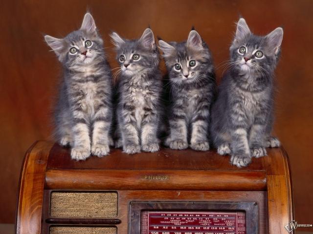 Четыре серых котенка