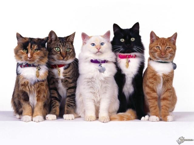 Пять очаровательных кошек