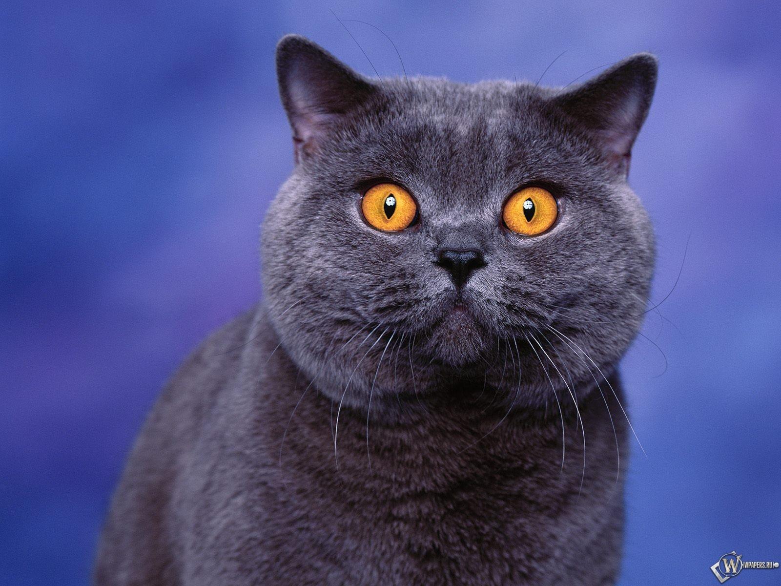 Глазастый кот 1600x1200