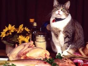 Обои Кот аристократ: , Кошки