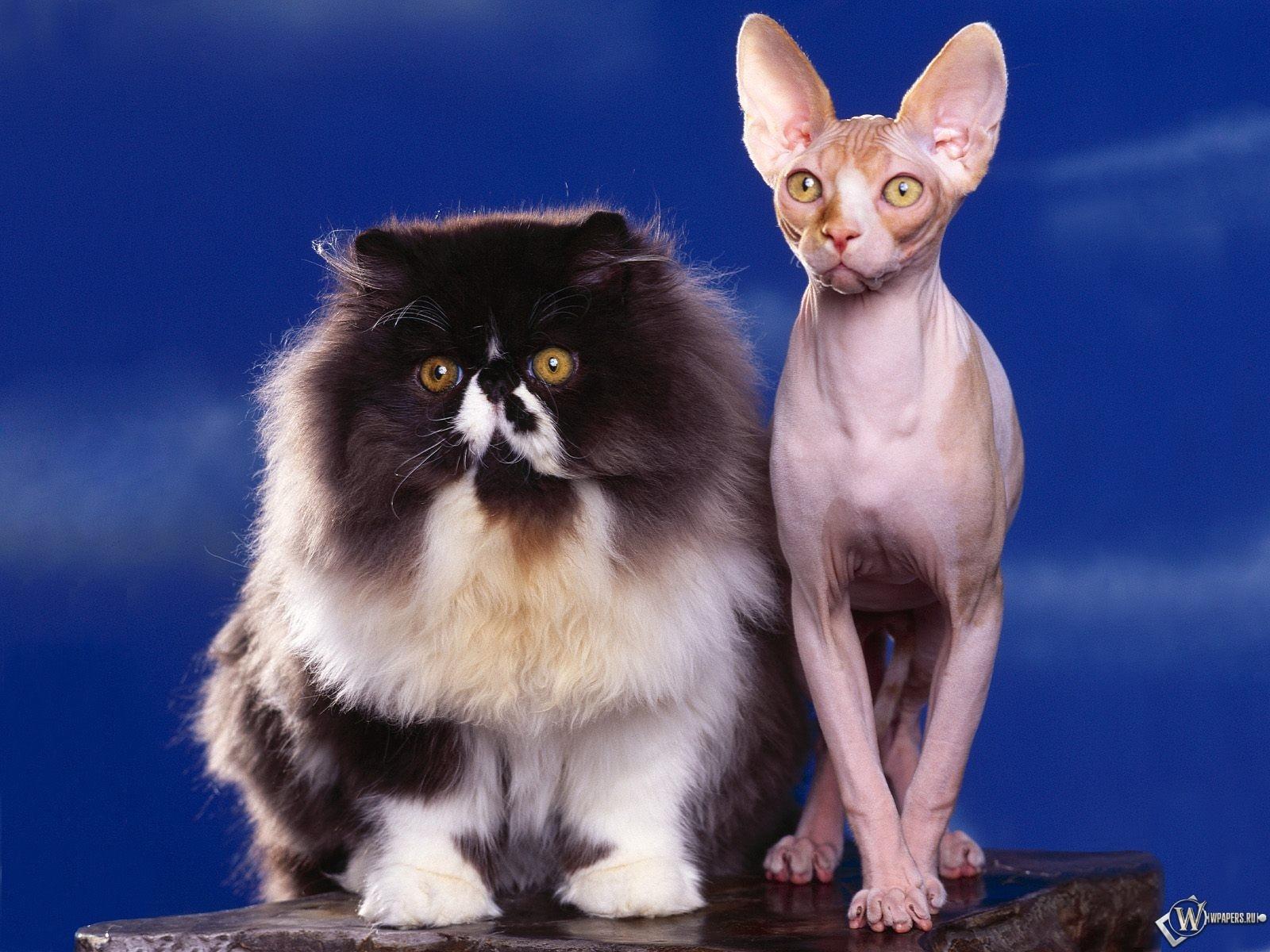 Толстый и худой кот 1600x1200
