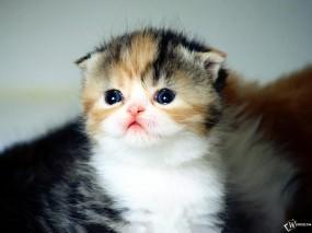 Обои Милый котенок: , Кошки