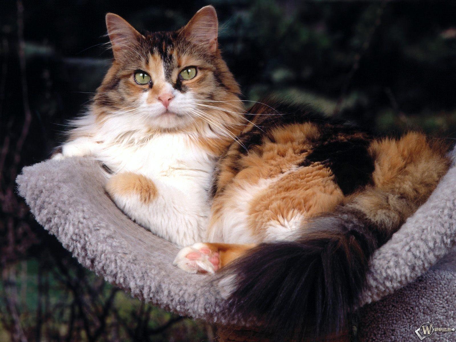 Кошак на подушке 1600x1200