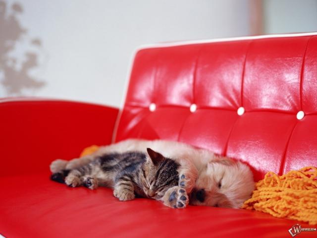 Котенок спит со щенком