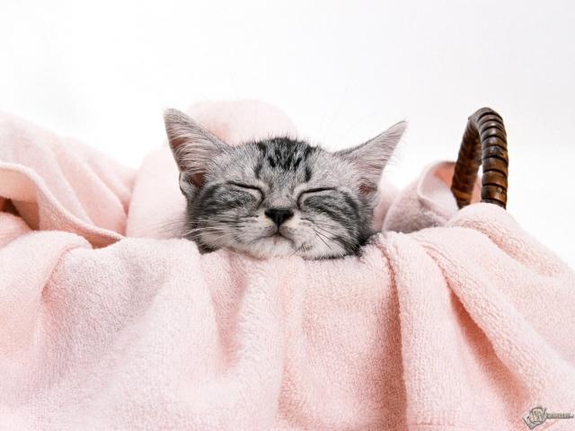 Котенок спит в корзинке