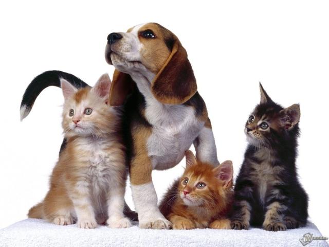 Три котенка и собака