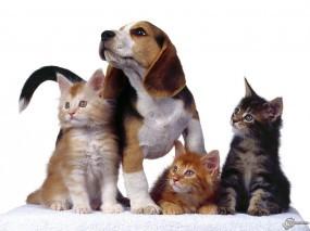 Обои Три котенка и собака: , Кошки