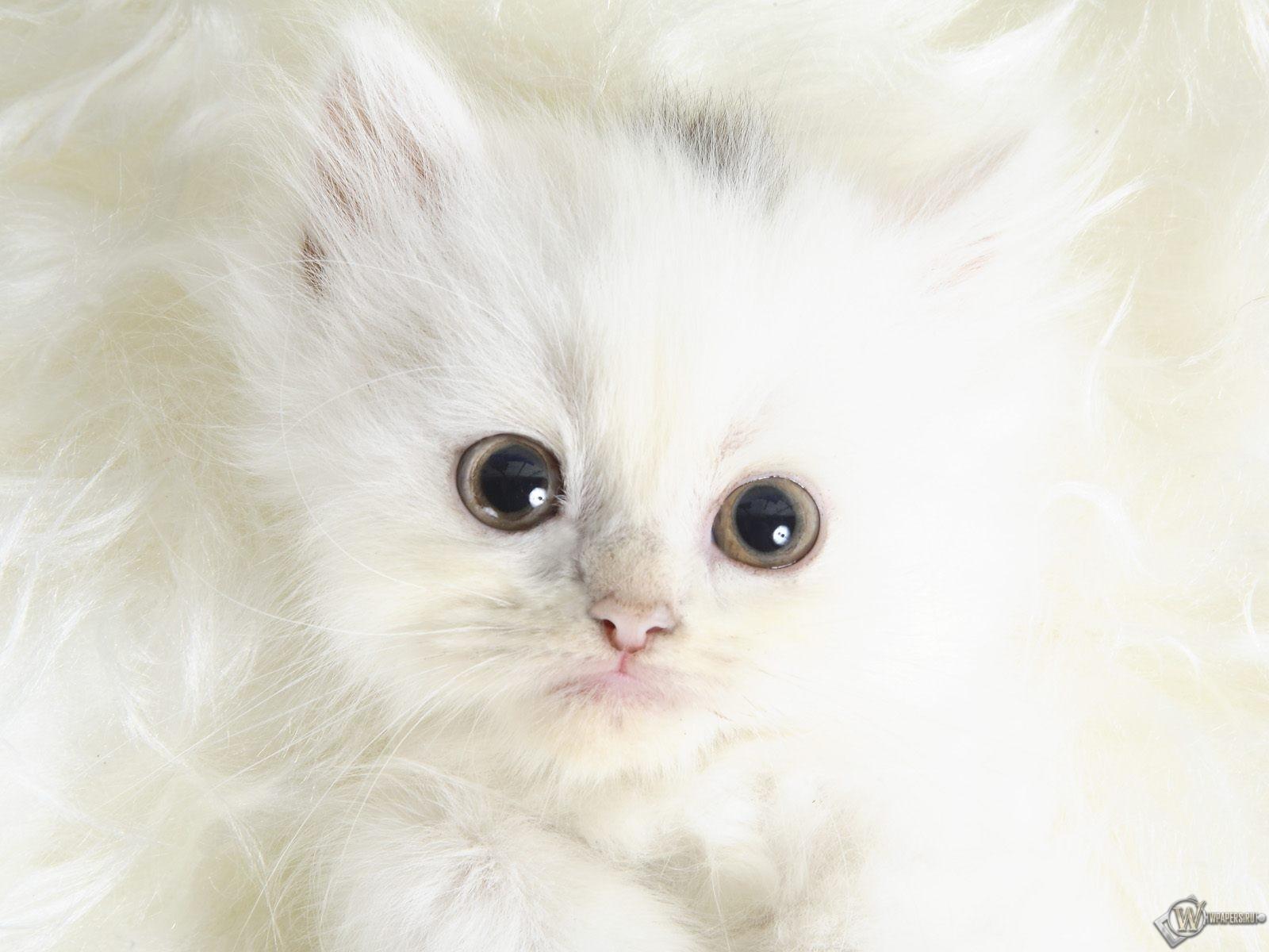 Белый котенок на белом 1600x1200