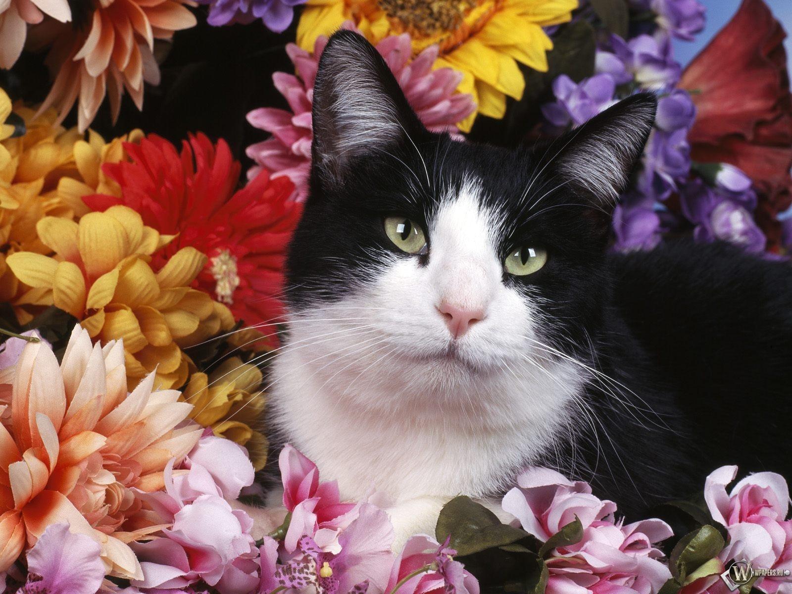 Кошка в цветах 1600x1200