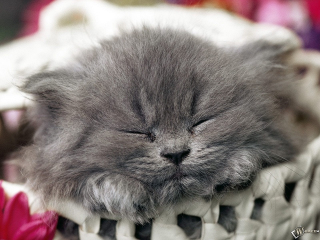 Котенок заснул в корзинке