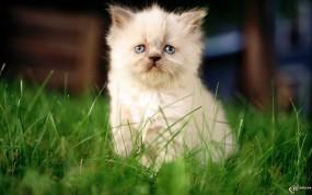 Обои Угнетенный котнок: Котёнок, Травка, Обида, Пушистик, Кошки