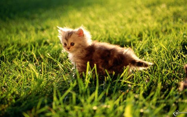 Котенок охотится в травке