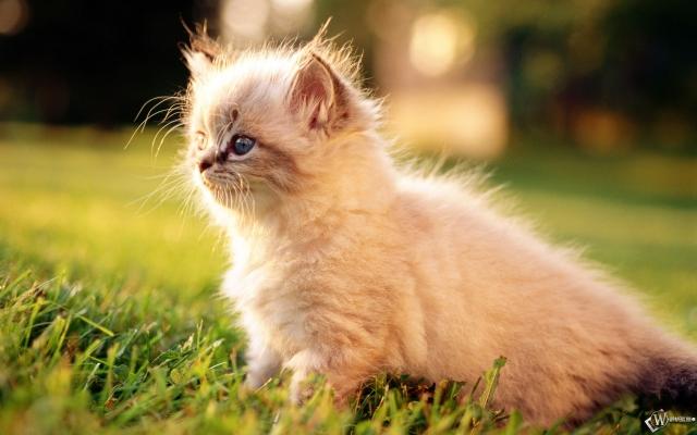 Пушистый котенок в траве