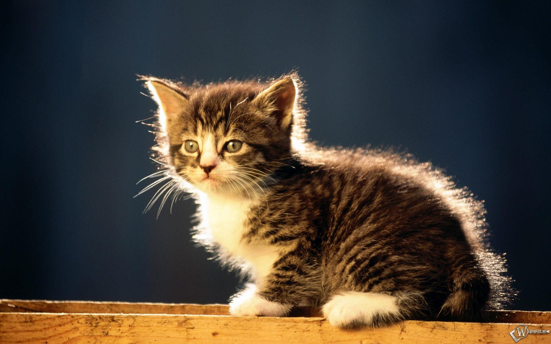 Котенок на досках 1920x1200