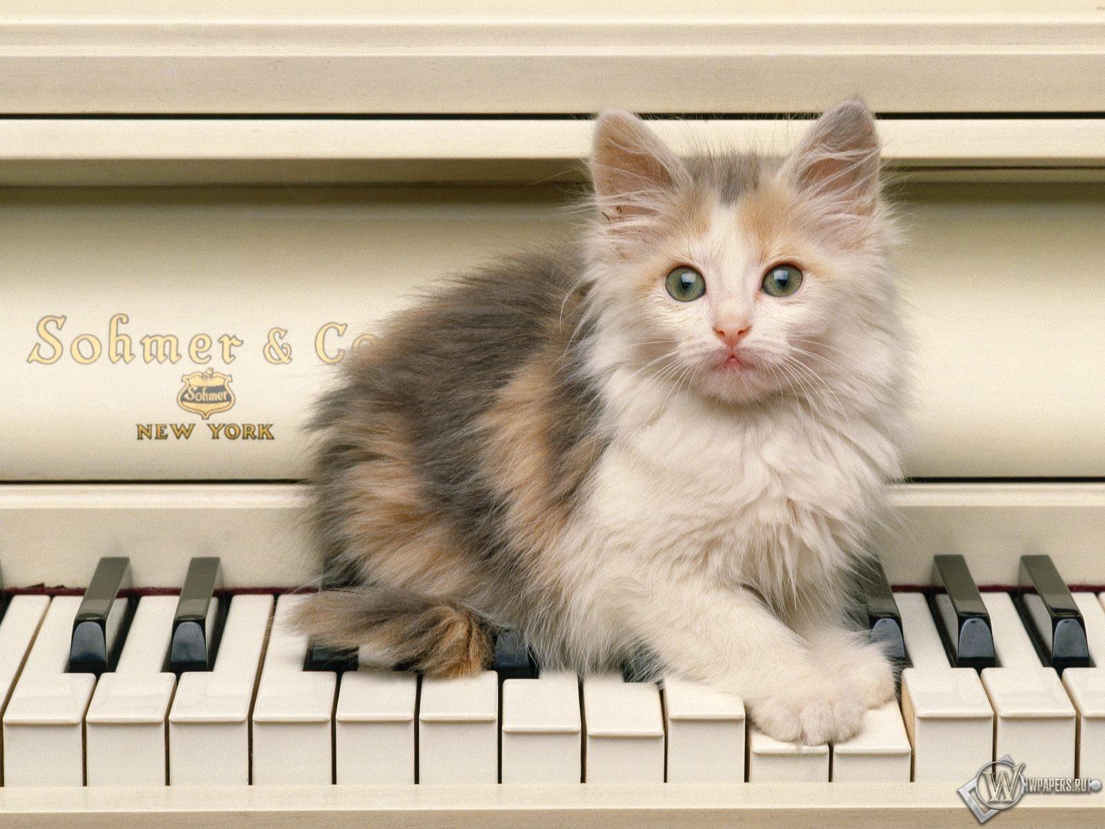 Котенок на пианино 1600x1200
