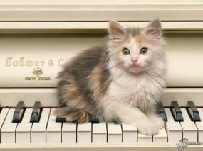 Обои Котенок на пианино: Котёнок, Пианино, Кошки