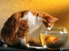Обои Кот и рыбка: Аквариум, Рыбка, Кот, Кошки