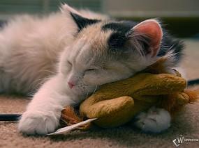 Обои Тигр с тигром: Кошак, Мурзик, Игрушка, Мур, Сон, Кошки
