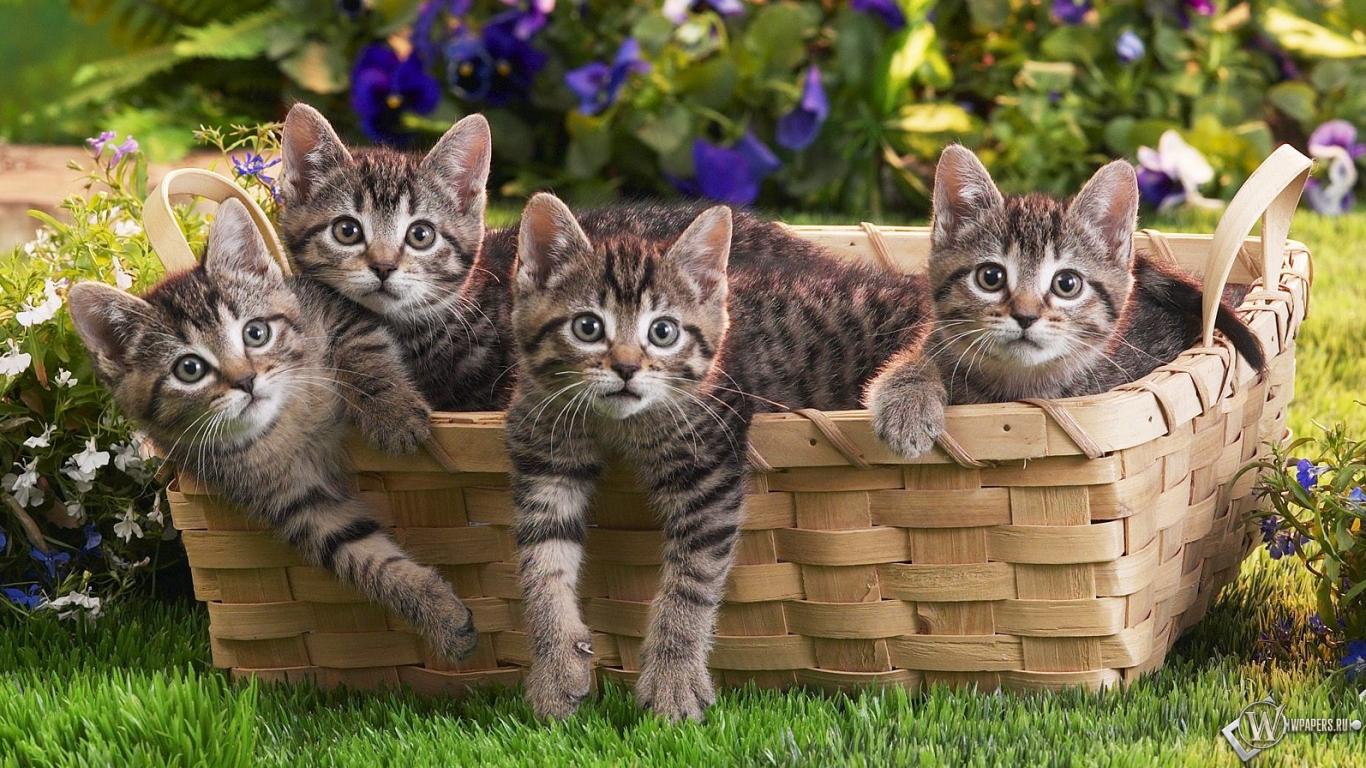 Обои котята в корзинке трава котята