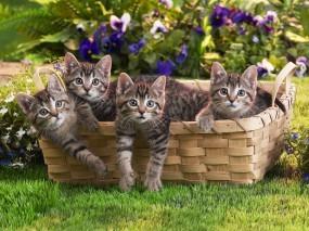 Обои Котята в корзинке: Трава, Котята, Корзина, Кошки