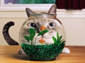 Обои Кошка и аквариум: Аквариум, Рыбки, Искажение, Кошки