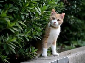 Обои Любопытный котёнок: Котёнок, Любопытство, Кошки