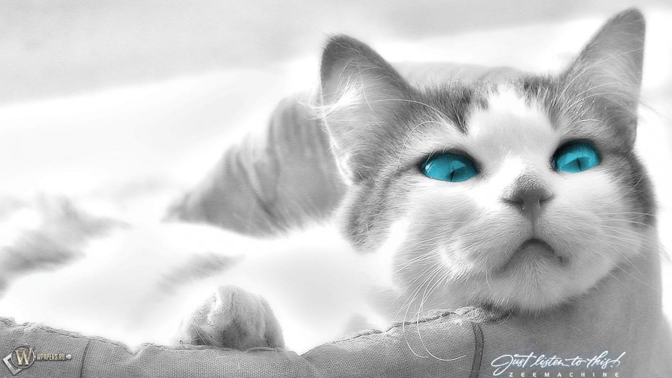 Кошка в лукошке 1366x768