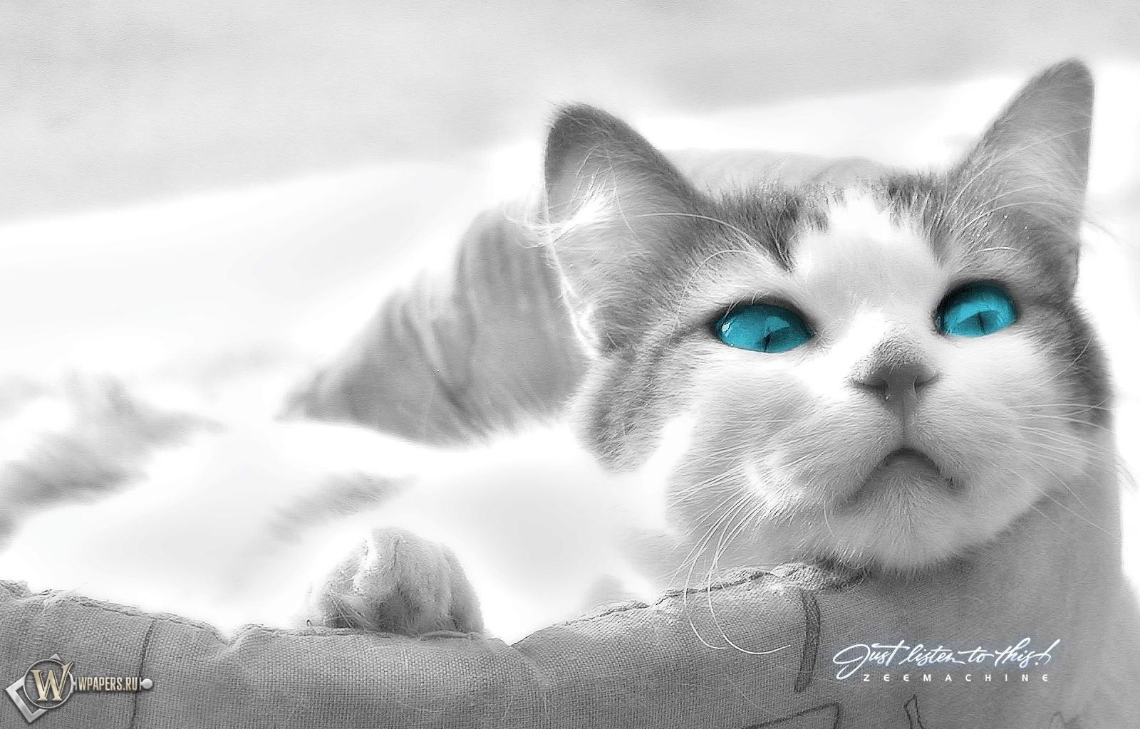 Кошка в лукошке 1600x1024