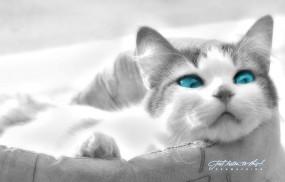 Обои Кошка в лукошке: Глаза, Морда, Кошка, Кошки