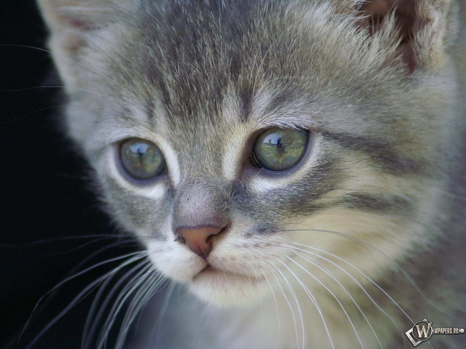 Удивленный котенок 1920x1440