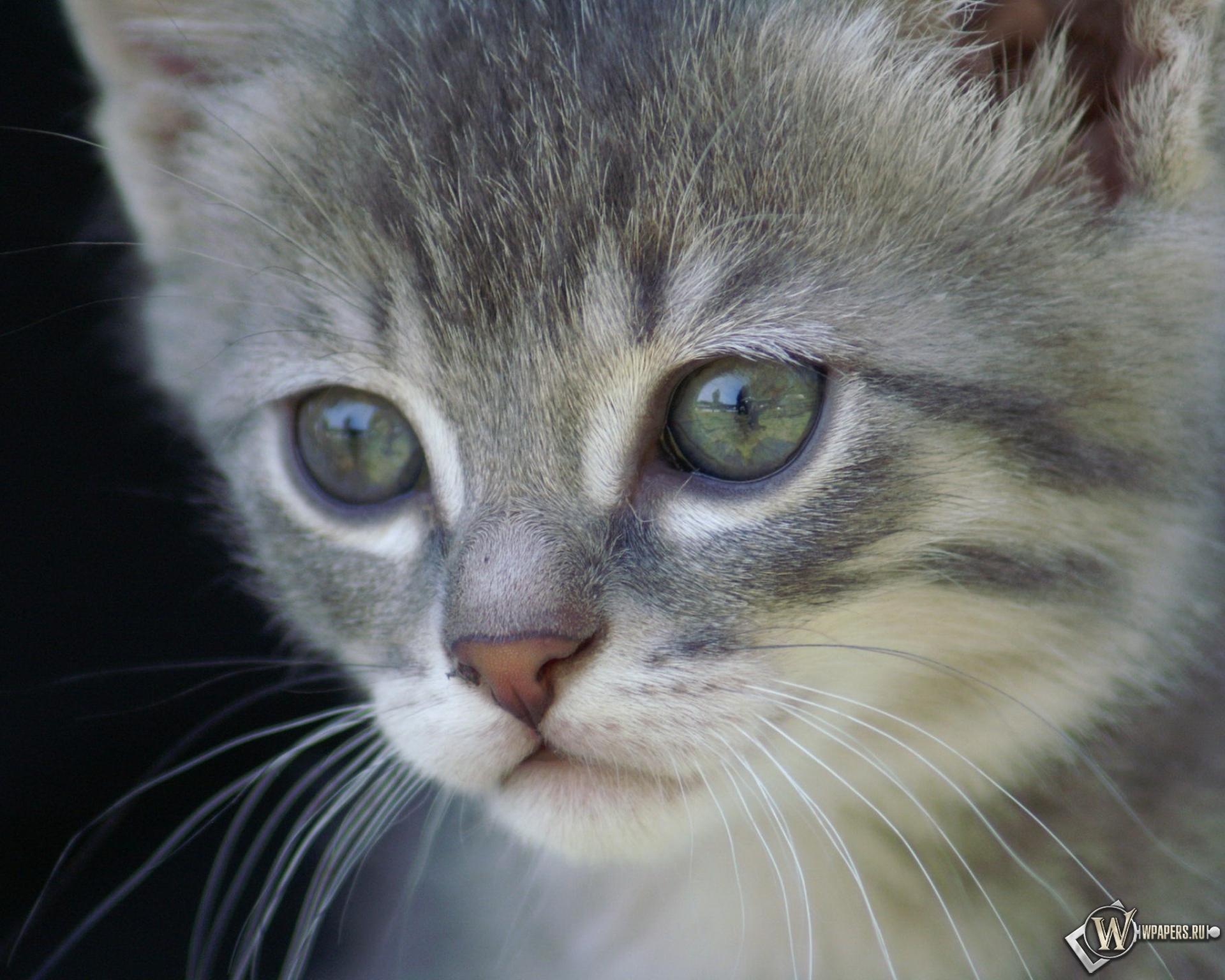 котята 4-5 месяцев фото