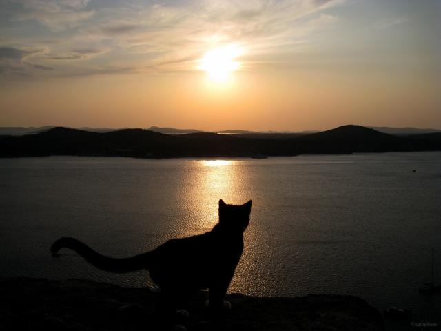 Кошка смотит на закат