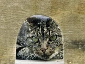 Обои Охота на мышей: Кот, MouseHunt, Нора, Охотник, Кошки