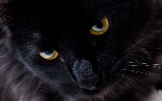 Глаза взгляд кошка чёрный кот кошки