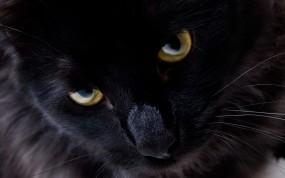 Обои Взгляд черной кошки: Глаза, Взгляд, Кошка, Чёрный кот, Кошки