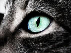 Обои Кошкин глаз: Глаз, Кошка, Кошки