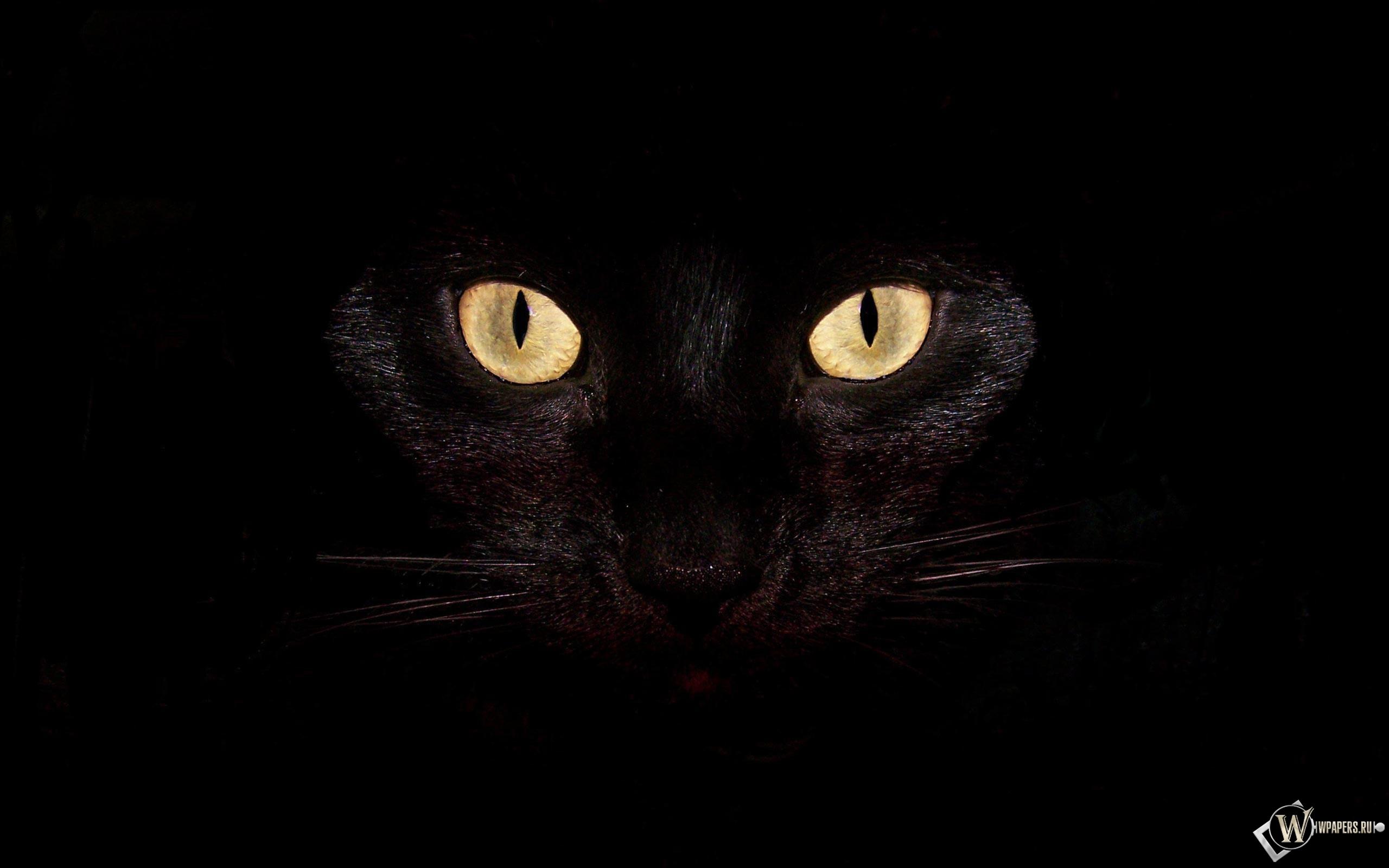 Черная кошка на чернофм фоне 2560x1600