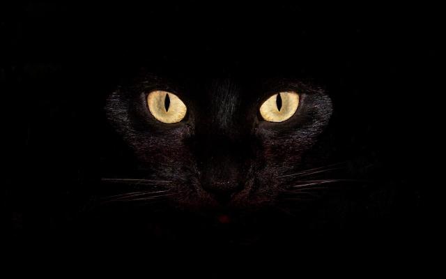 Черная кошка на чернофм фоне