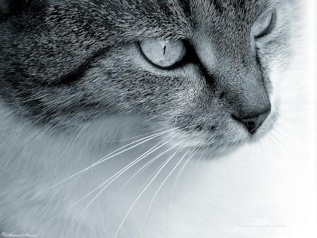 Кошкин взгляд