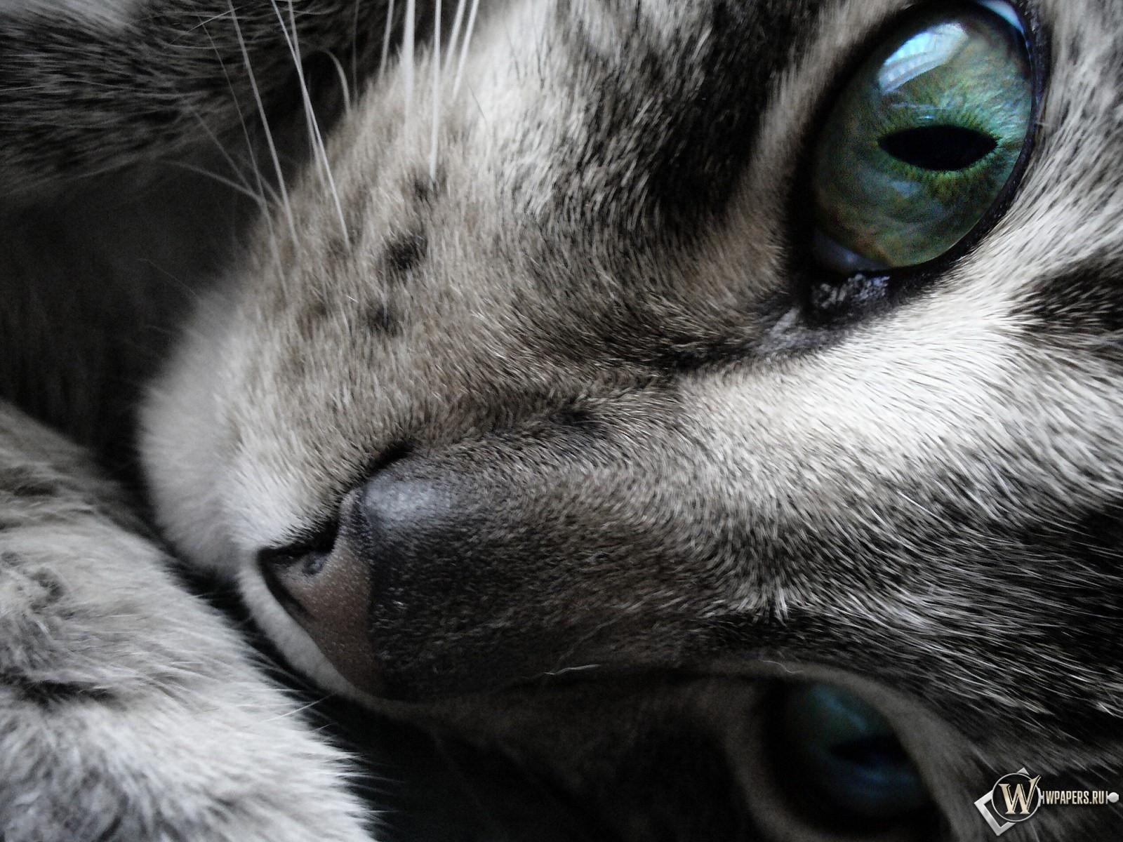 Усталая кошка 1600x1200