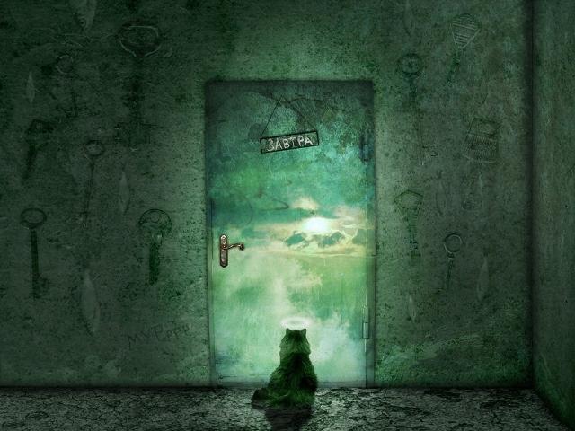 Кот у закрытой двери
