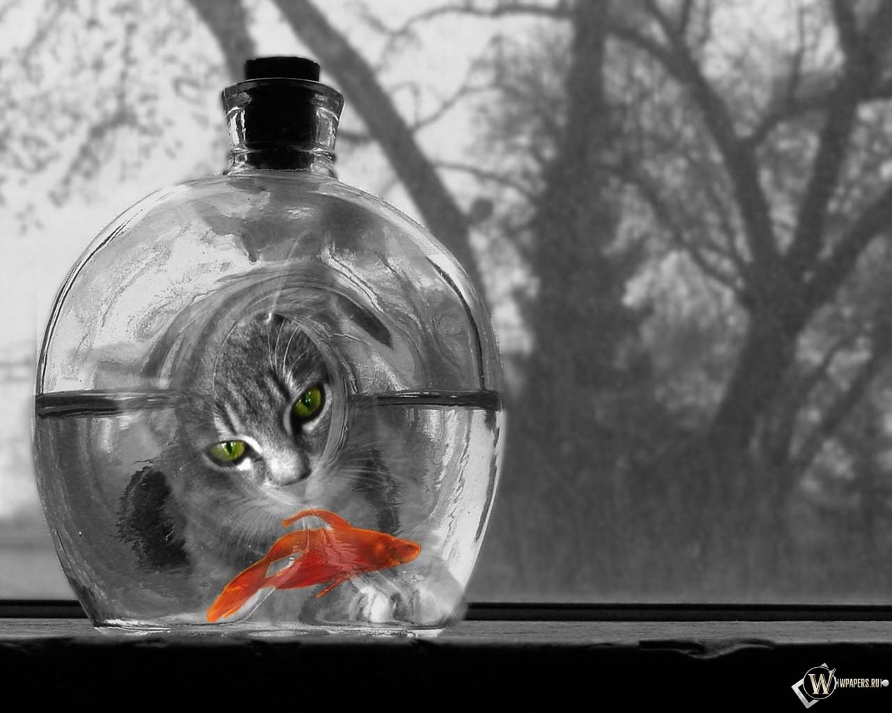 Кот и рыбка 1280x1024