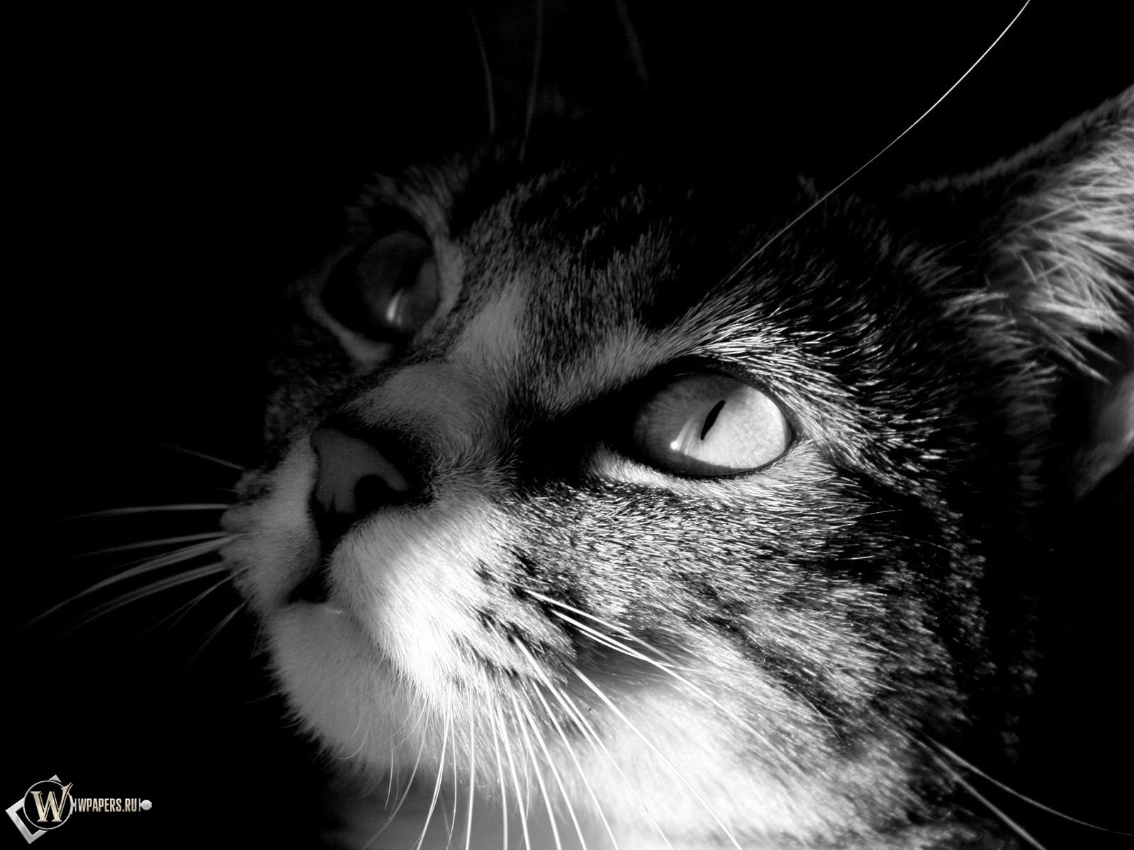 Кот смотрит на свет 1600x1200