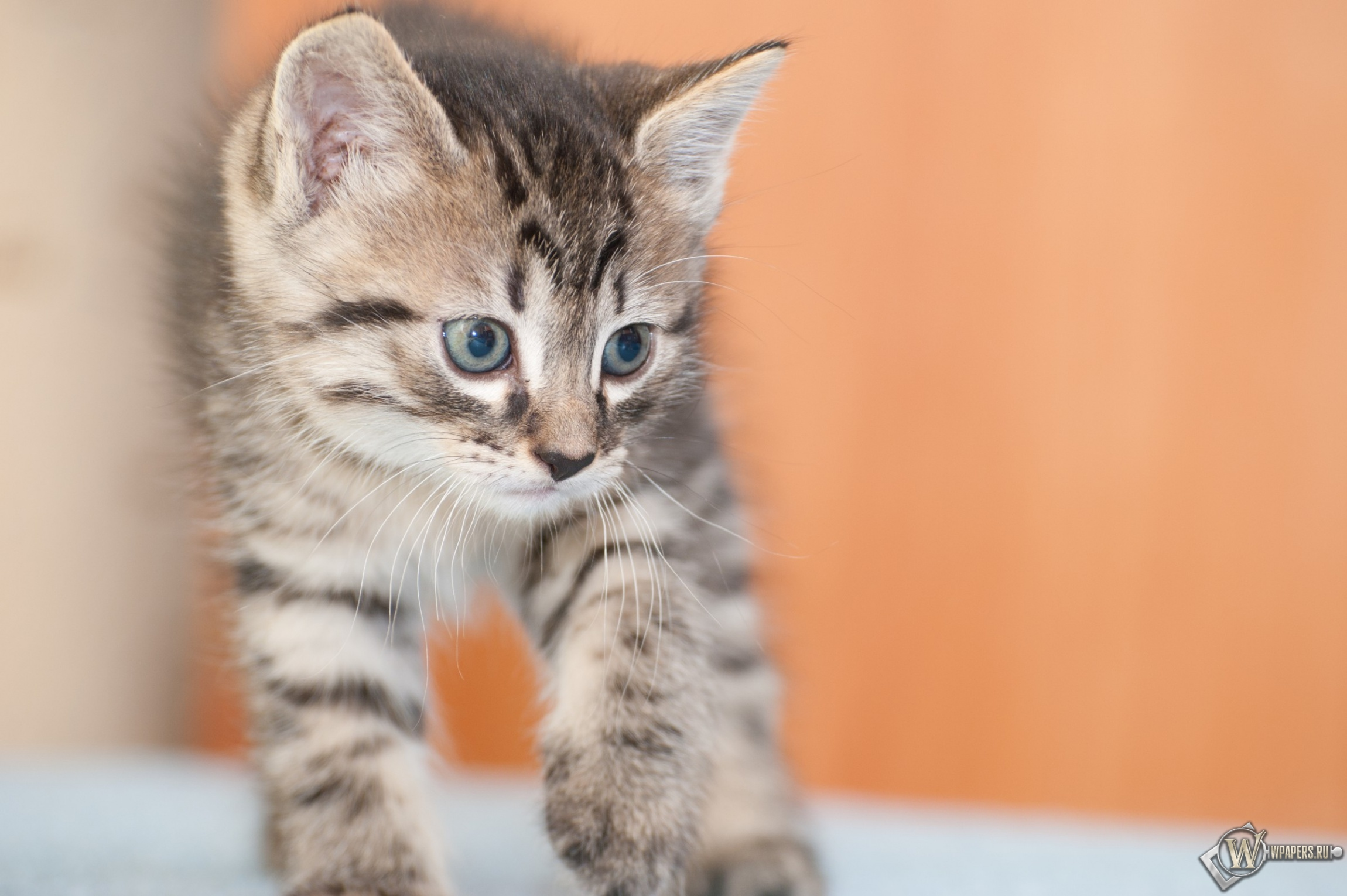 Котёнок 2300x1530
