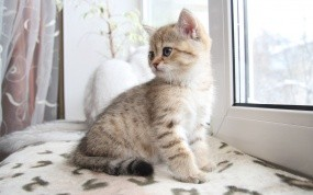 Обои Котенок сидит на окне: Окно, Котёнок, Кошки