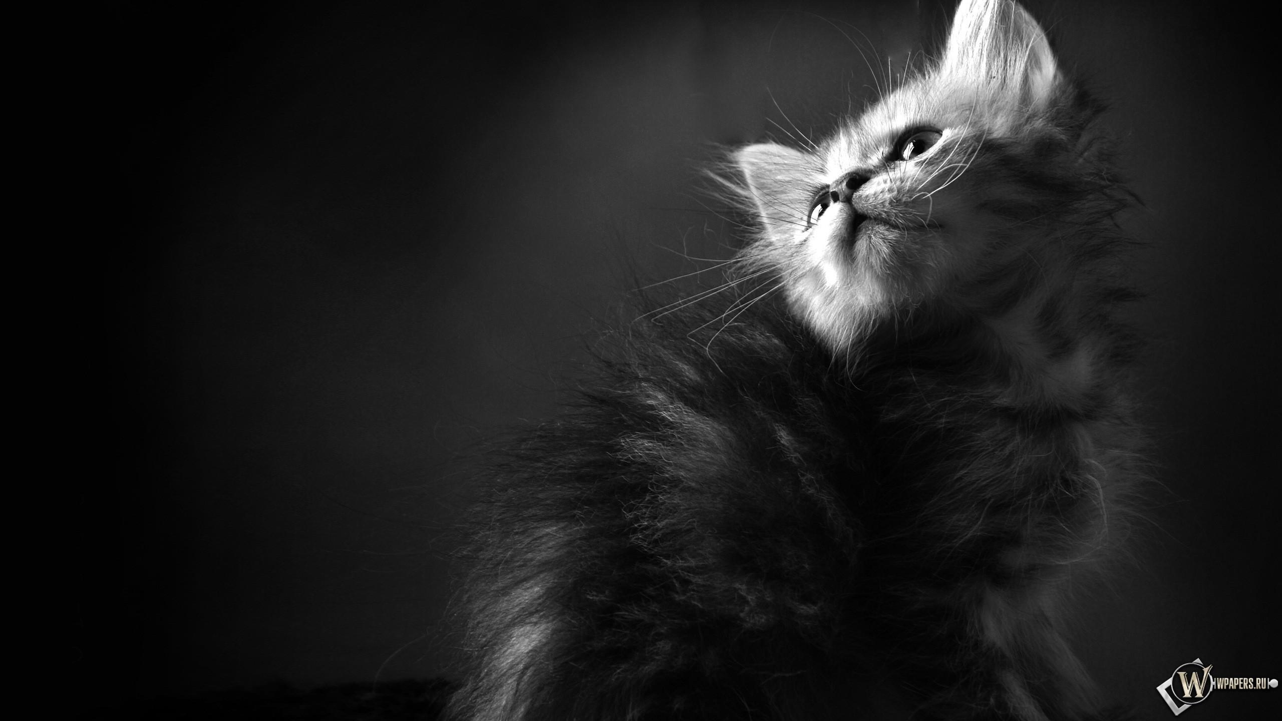 котята жодино с фото #12