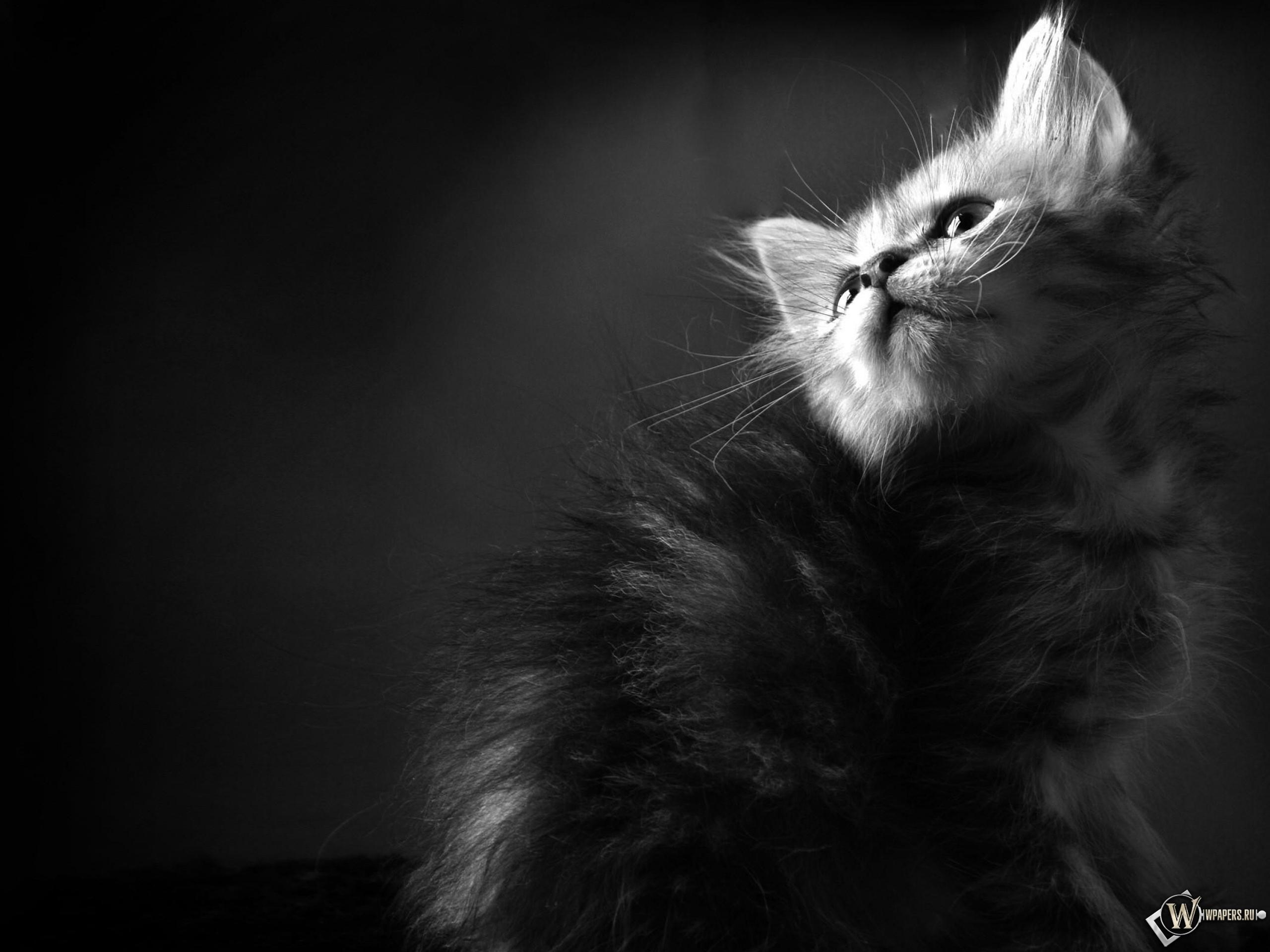 котята жодино с фото #16