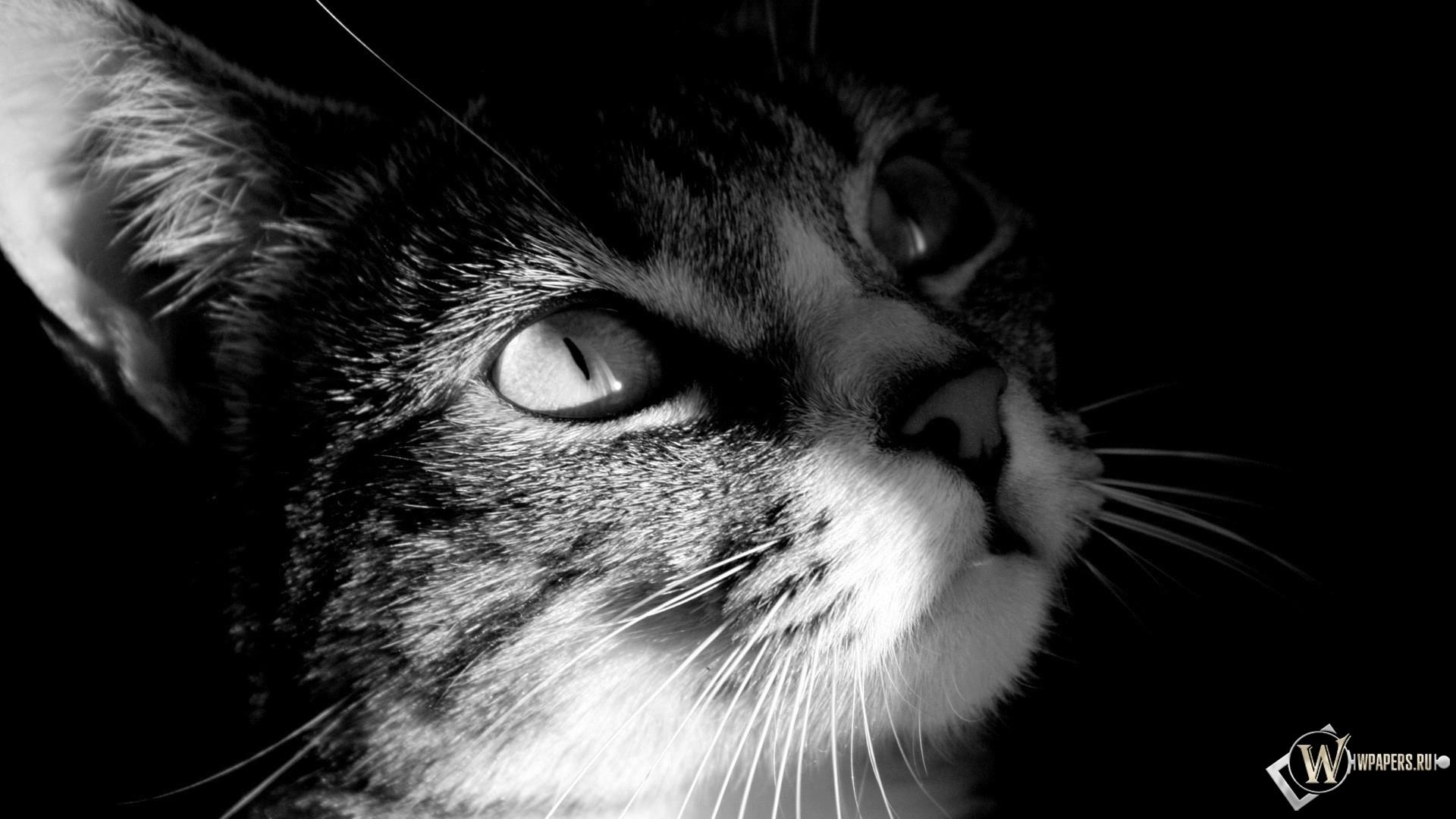 взгляд кота 1920x1080