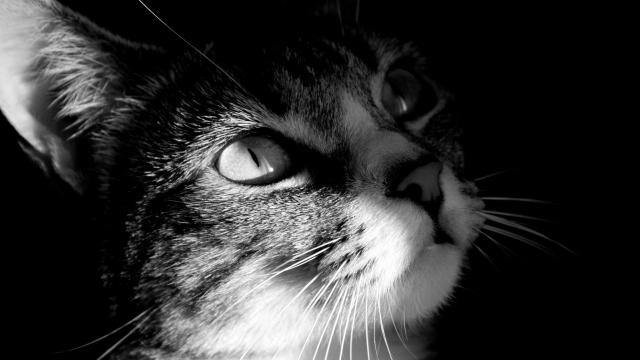 взгляд кота